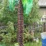 Как сделать качели в виде пальмы