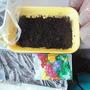 """""""Первый раз в 1-й класс"""" - как вырастить здоровое растение из семени до высадки его в открытый грунт?"""