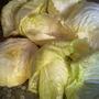 Знаете ли вы простой способ разделения листьев капусты для приготовления голубцов?