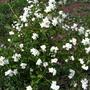Хочу посадить этой весной понравившиеся мне растения, но все ли они смогут пережить  наши Уральские морозы?