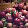 Мега урожай яблок. Нужно ли опрыскивать фруктовые деревья?