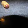 Посоветуйте эффективные современные методы борьбы с личинкой майского жука