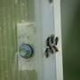 Что за крылатые муравьи в теплице?