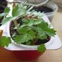 Борьба с майским жуком: мой опыт