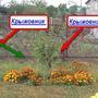 Можно ли сажать наперстянку в непосредственной близости к плодово-ягодным культурам?