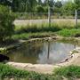 Садовый водоём