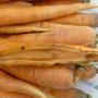 Почему треснула морковка? Что со свёклой: вредители или болезнь?