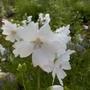 Помогите, пожалуйста, узнать название цветка