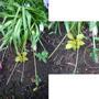 Помогите распознать растюшки