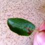 Коричневые пятна на листьях яблоньки - что это и как бороться?