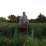 Собираем урожай томатов (итоги сезона)