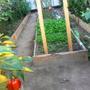 И в октябре теплица не отдыхает. На смену раннему Балконному чуду пришли салаты, редис, петрушка, кинза. 5 октября еще зреют и помидоры, и баклажаны, и перец. В холодные ночи включаем масляный обогреватель.