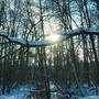 На деревянной ладошке))