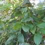 Помогите определить название дерева. Как можно его пересадить?