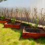Грядки-коробочки для черной смородины и крыжовника...