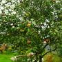 Что с моей яблоней и можно ли её спасти?