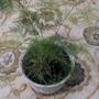 Как называется это растение и как избавится от маленьких белых мошек на нем?