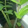 Как размножается это растение и как его зовут?