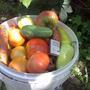 Август. Первый опыт органического земледелия