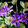 Цветы эти - звёзды  упавшие с неба