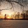 колоски выстоявшей зиму травы освещены закатным солнышком