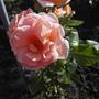 Немного свежих фотографий, в основном цветы