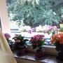 В семье не поддерживают мое увлечение цветами