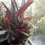 Помогите узнать, что за цветок