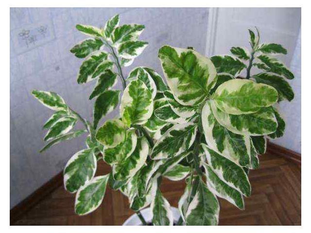 Фото комнатные цветы зеленые