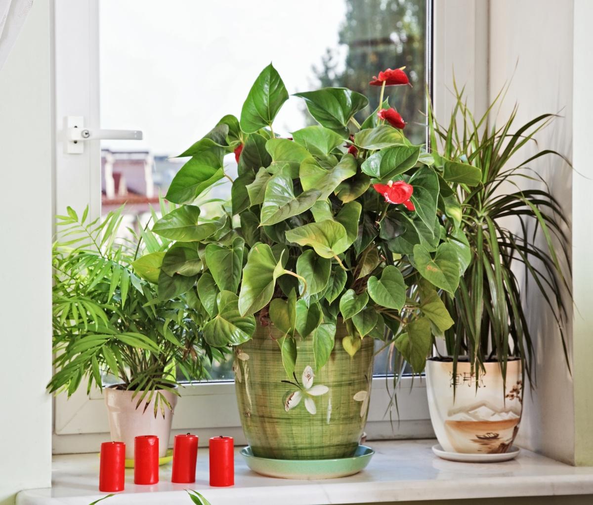 Комнатные растения: Фиалки 29