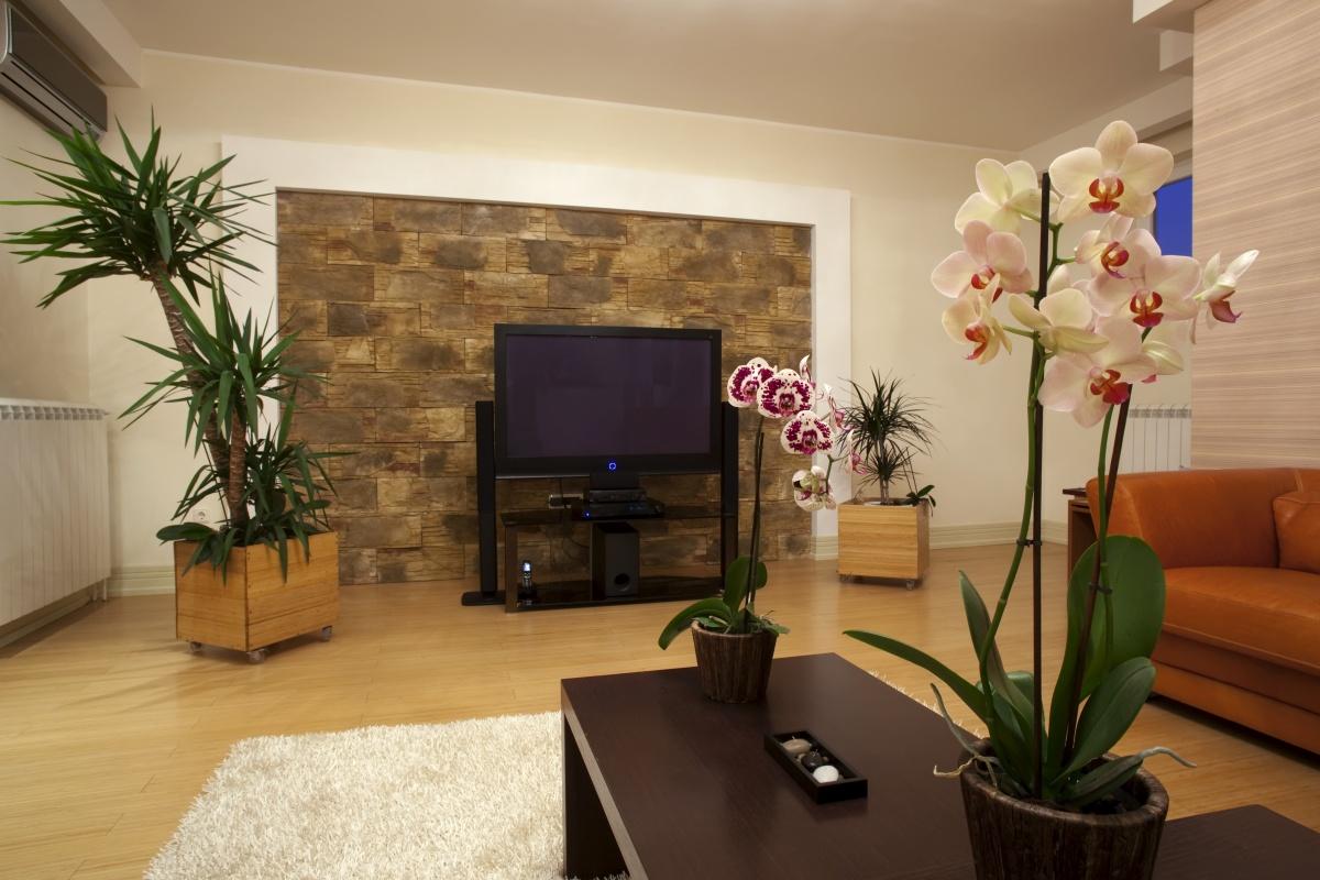 Цветы в гостиной фото