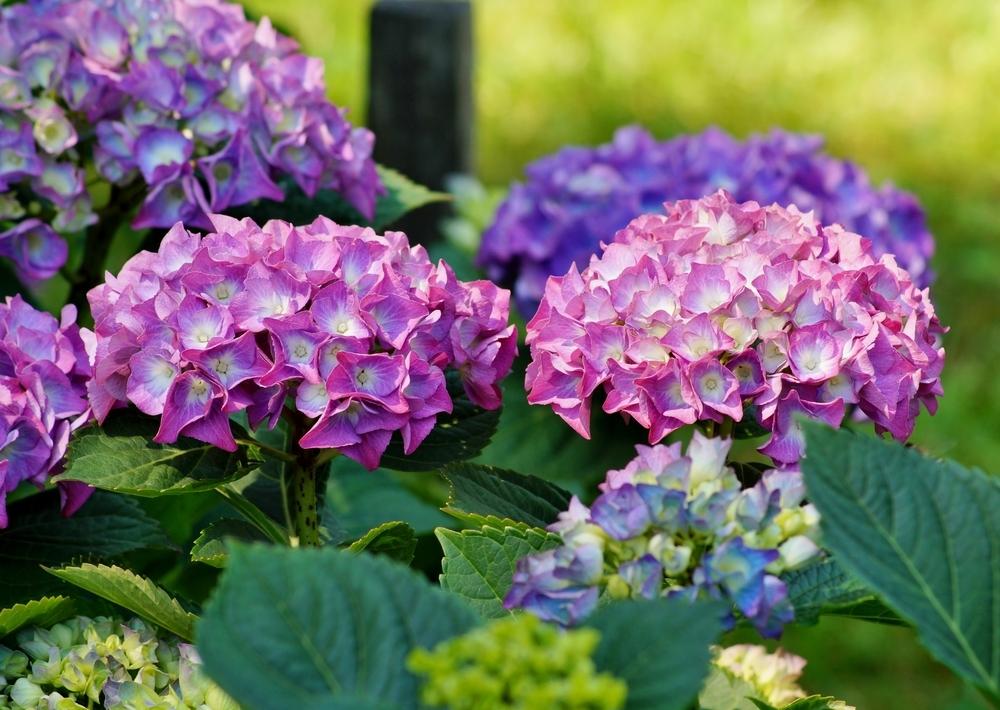 Цветочная любовь Цветочный магазин Киев Цветы для сада