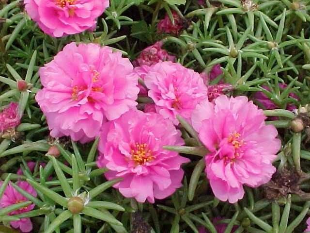 растения огородные фото и названия