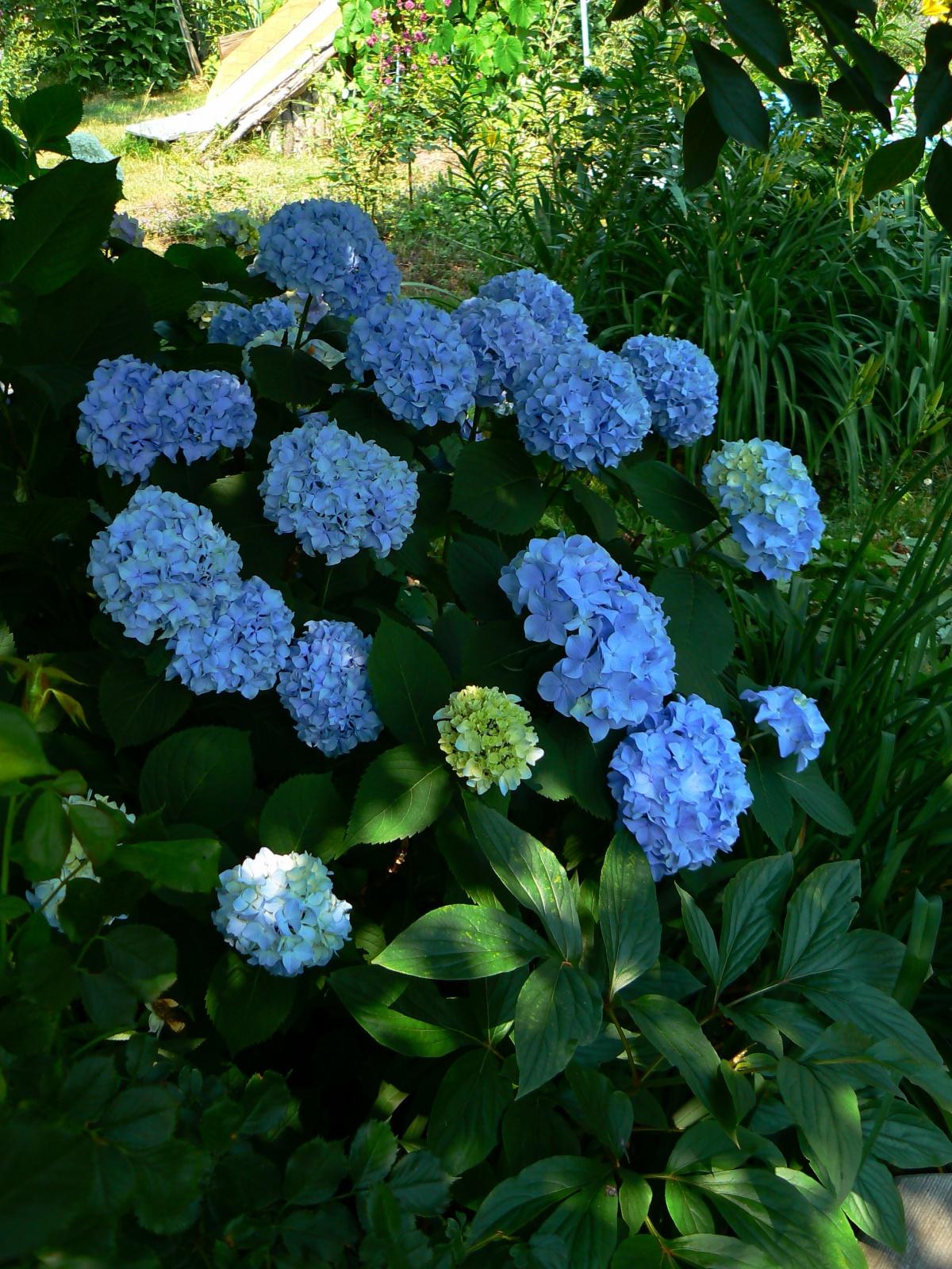 Какие цветы в июне в саду
