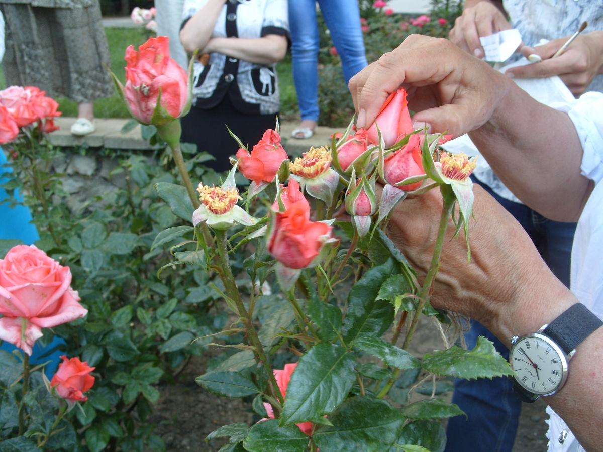 Цветок с бутоном как у розы