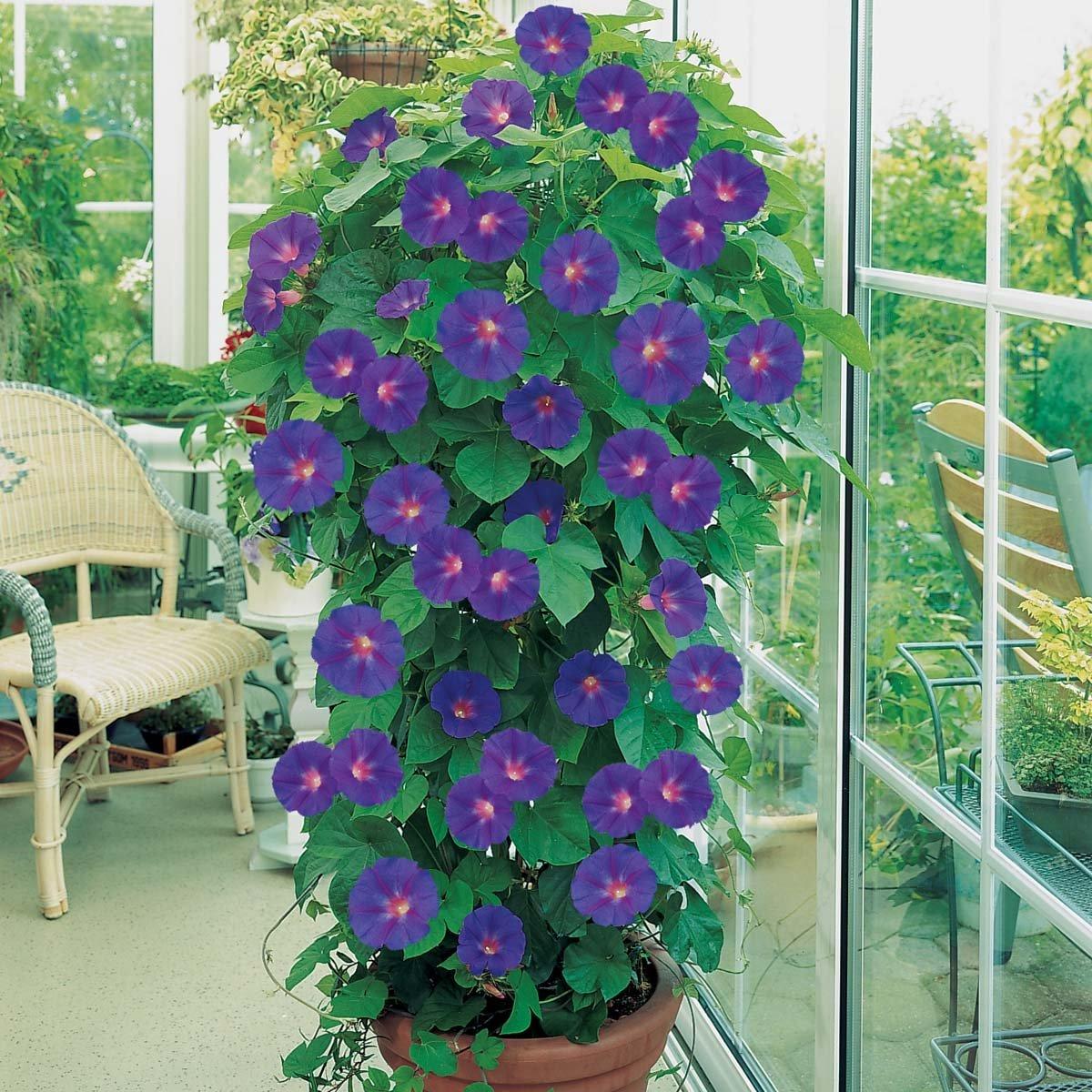 Цветы для балкона на солнечной стороне : советы по выбору.