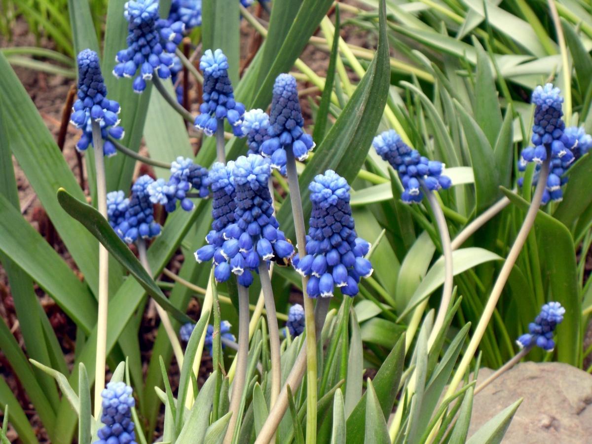Клумбы и цветники на даче: весенние клумбы, фото цветов
