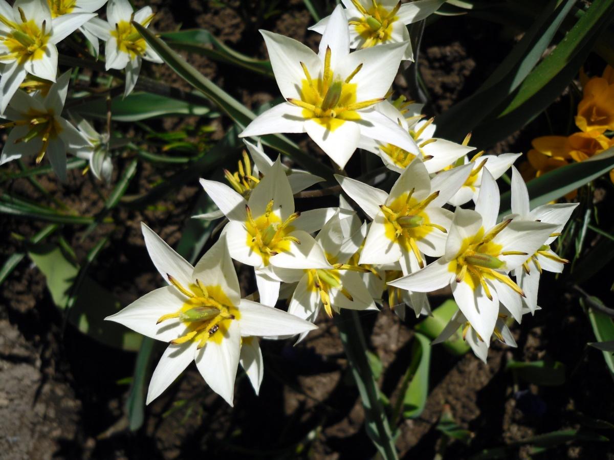 Лесные цветы в саду