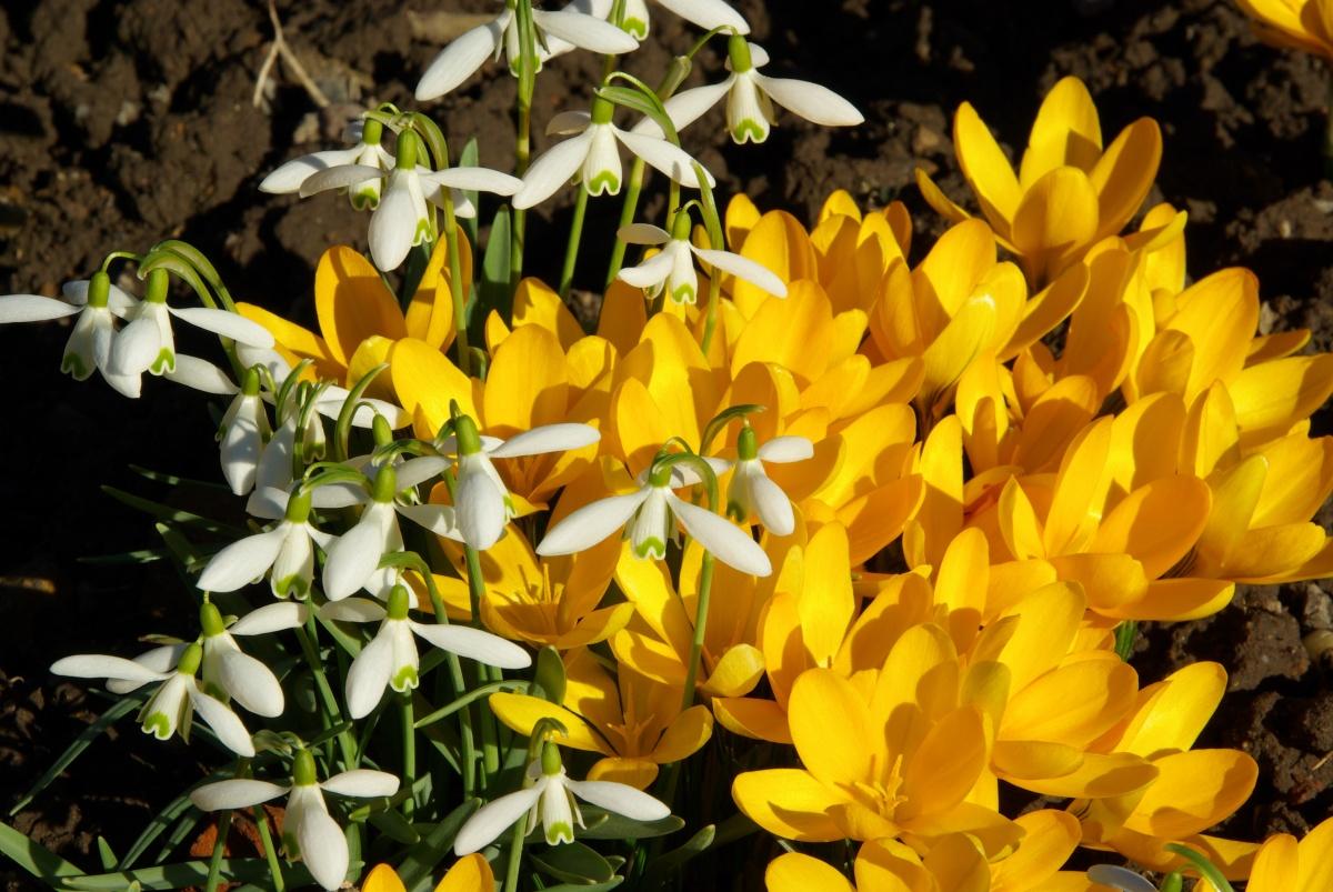 Цветок весны цветок солнца рассказ картинки