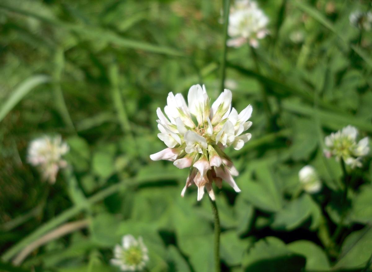 Зеленое удобрение из травы рекомендации