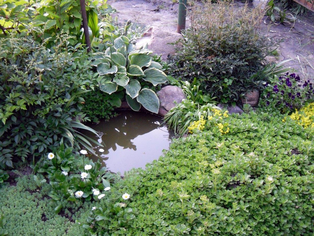 С чем посадить нарциссы и тюльпаны