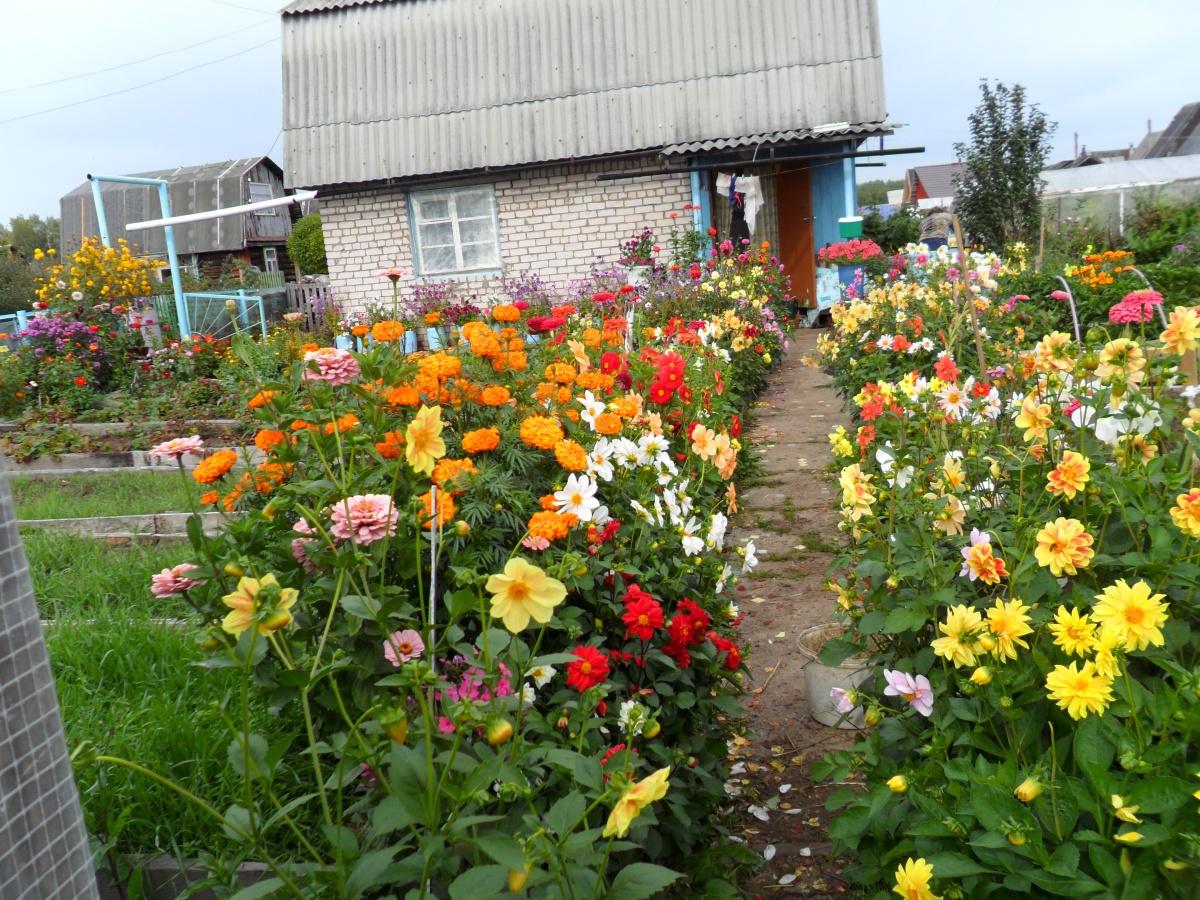 Какие сажать цветы на даче 484