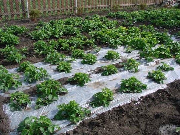 Своими руками биопрепарат для растений