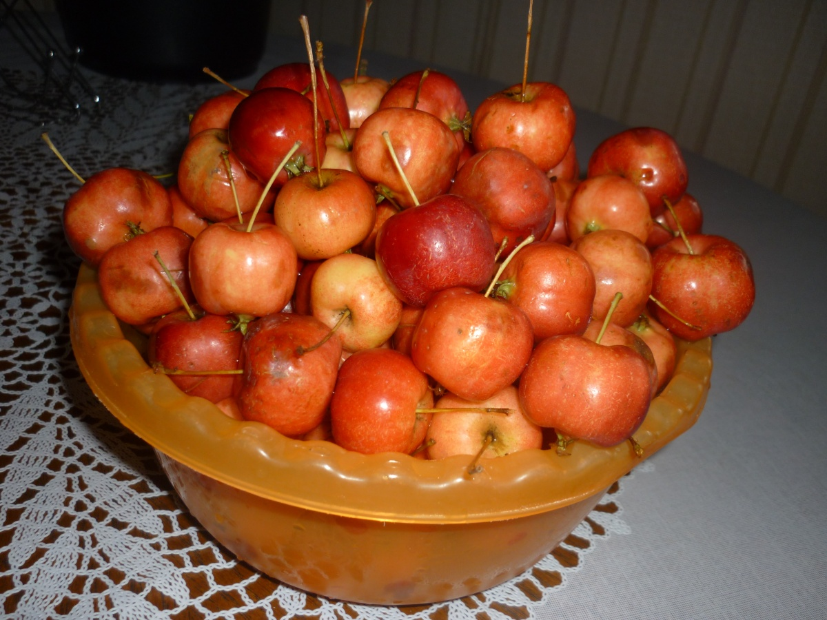 рецепты с яблоками медовой китайки