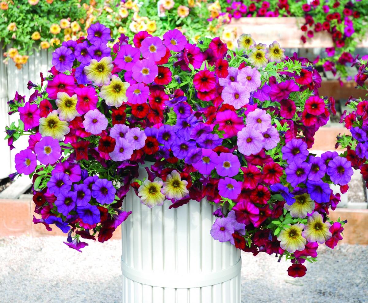 Цветы в горшках в саду