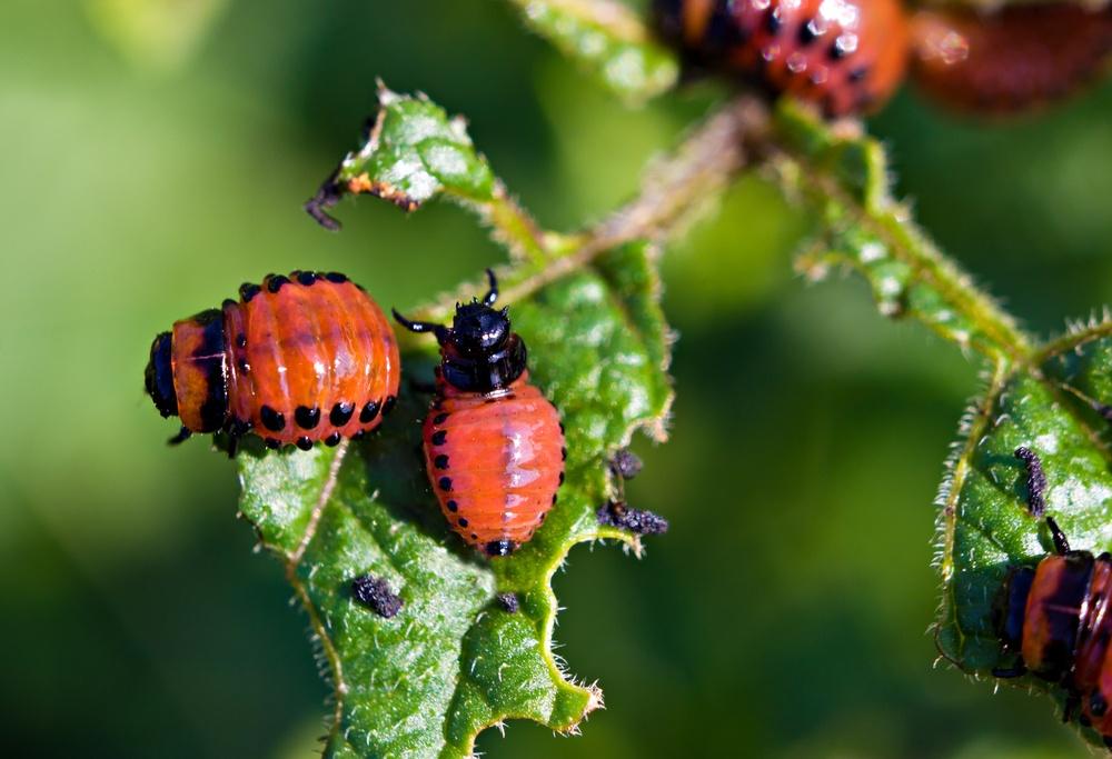 народные методы борьбы с паразитами в организме