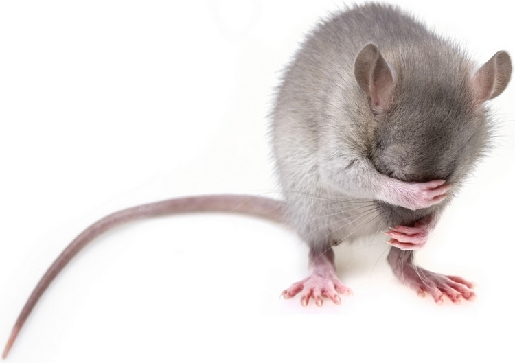 лучший отпугиватель мышей и крыс купить