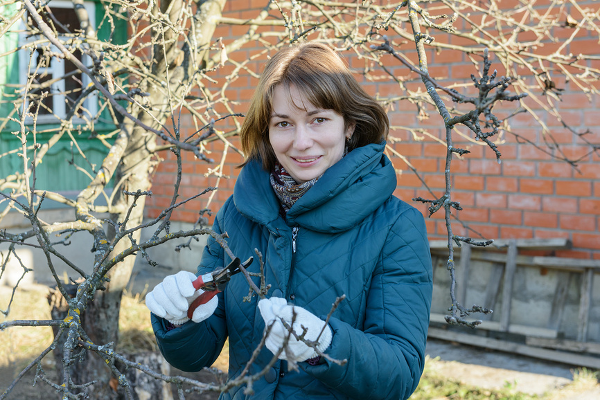 Как очистить яблоню от лишайника