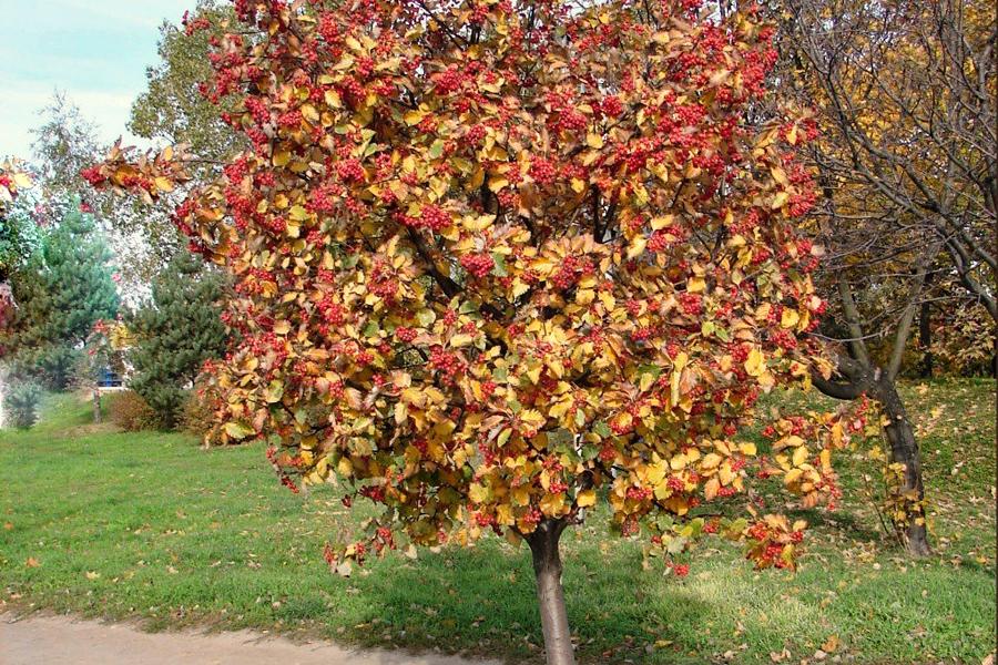 Фото ветка рябины осенью