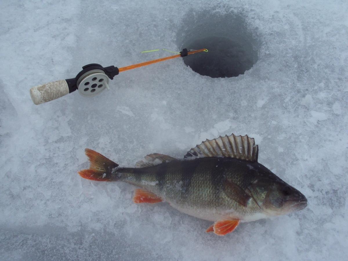 почему рыба не клюет в жару